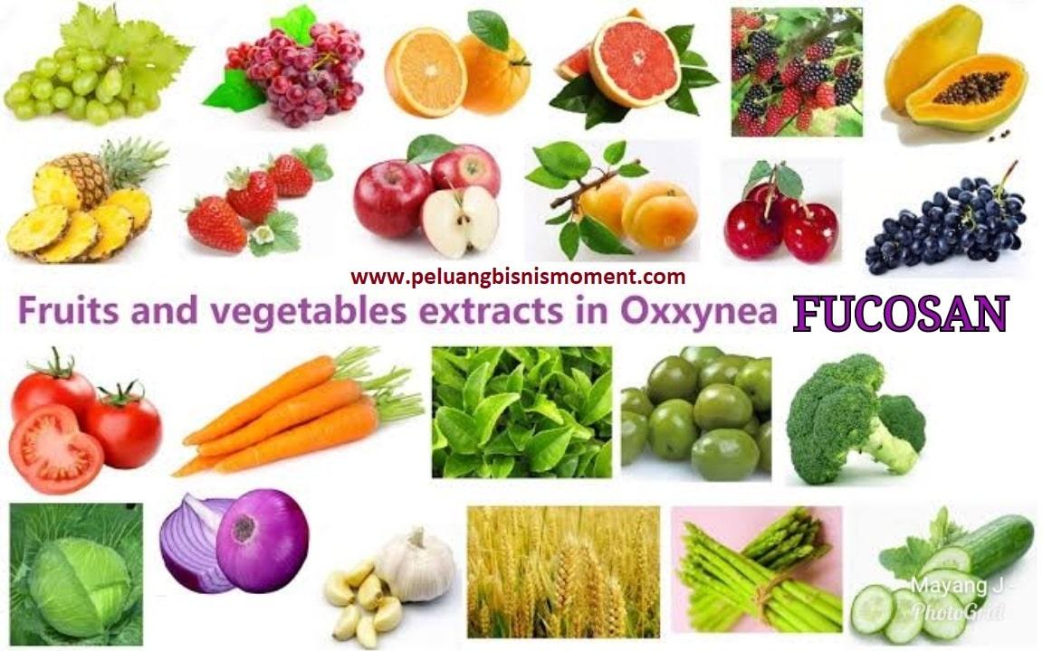 oxxynea-fucosan